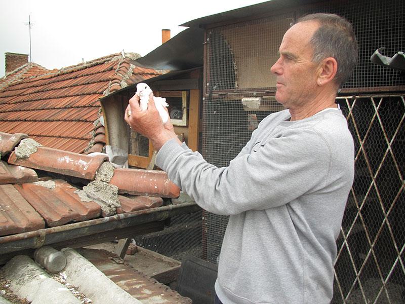 Гълъбар Таньо Койчев